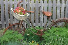 I love an old bike in the garden...