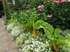 Improve Neighbor Relations with These Tips for the Edible Landscape | The Survival Gardener