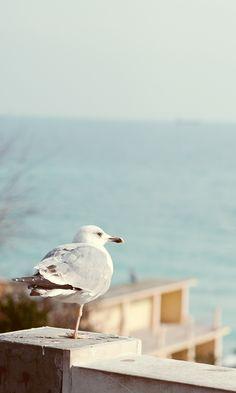 Seagull sitting pretty