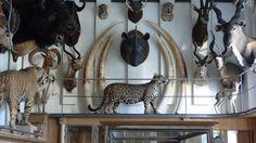 LE MUSÉE DE LA CHASSE ET DE LA NATURE François et Jacqueline Sommer, créateurs du musée souhaitaient en faire une expérience unique de dépaysement, présentant leurs collections d'œuvre d'art, d'armes de chasse et d'animaux naturalisés comme une expèrience unique. Le nouvel aménagement du Musée inauguré en 2007 s'étend désormais à l'hôtel de Mongelas mitoyen. En juxtaposant l'art contemporain et les collections scientifiques, ce moderne cabinet de curiosités interroge sur les contours d'une…
