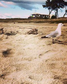 Seagull, Papamoa Surf Club, Papamoa Beach, New Zealand. 2016. Photographer Kellie Rillstone. #whim_adventurous