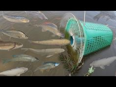 Creative Girl Make Fish Trap Using PVC - Fan Guard - Basket To Catch A Lot of Fish - YouTube