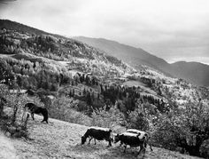 Flatdal, Telemark. October 1954. Photo: Paul A.Røstad / Owner: DEXTRA Photo Image Archive, October, Mountains, Nature, Travel, Naturaleza, Viajes, Destinations, Traveling