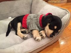 Here's a sleeping puppy in an itty, bitty sweater.   31 Adorable Animals Who Will Help Start Your Year Off Right