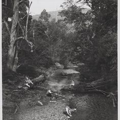 """""""Apollo Bay Victoria"""". Victorian Railways photographer between 1946 and 1950.  Search H2014.1020/27 in the catalogue  to view or download this photograph in high resolution  #SundayDrive #StateLibraryVic #LibrariesofInstagram #ApolloBay #BarhamRiver #Picnic #vintagephoto #blackandwhite by library_vic http://ift.tt/1LQi8GE"""