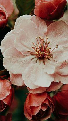 Flower Iphone Wallpaper, Flower Background Wallpaper, Fall Wallpaper, Locked Wallpaper, Cute Wallpaper Backgrounds, Flower Backgrounds, Colorful Wallpaper, Aesthetic Iphone Wallpaper, Aesthetic Wallpapers