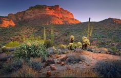 Bulldog Canyon near Apache Junction