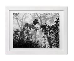 Black and White Nature Photography, Rainforest in Costa Rica, Fine Art Print Jungle Landscape, Ecofriendly Home Decor, Art for Gallery Wall