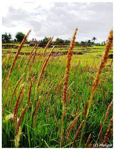 Old Banten - Indonesia Java, Vineyard, Dreams, Places, Outdoor, Outdoors, Vine Yard, Vineyard Vines, Outdoor Games