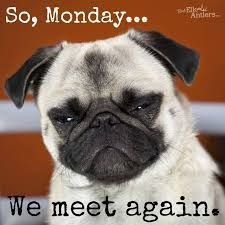 Image result for #pug good morning meme