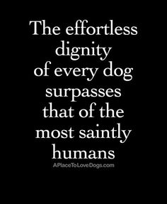 The Effortless Dignity of Every Dog | Quote - A Place to Love Dogs