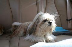 Ik ging graag mee met de mama in de auto. De hele achterbank voor mij alleen!!!