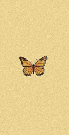 butterfly wallpaper❤️