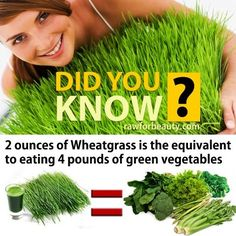 2 oz of Wheatgrass is the equivalent to eating 4 pounds of green vegetables!