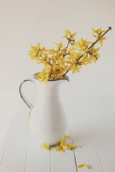 I have a bit of a love affair with forsythia & the way their vibrant yellow blooms shine when brought inside in a simple white pitcher ~ photo from Hannah Queen's flickr stream