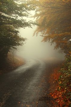 Autumn mist on a country road. I'd love to drive down this road to look at the leaves!