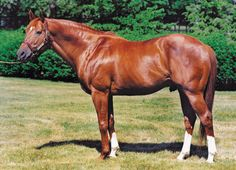 Secretariat | Then there was Big Red. Secretariat. What wasn't to love about him ...