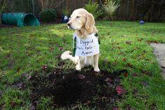 """I Digged this Hole - Again. I haz no remorse."" ~ Dog Shaming shame"