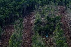 PaperOne's environmental pledge sparks race to clear Sumatran forest