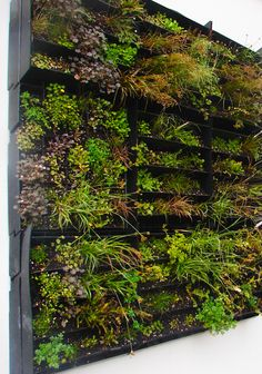 Living wall for outside.