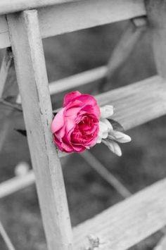 Pretty pink ✨