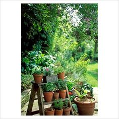 pots on ladder...perfect for small herbs on back porch.  Maybe paint the ladder a pretty yellow