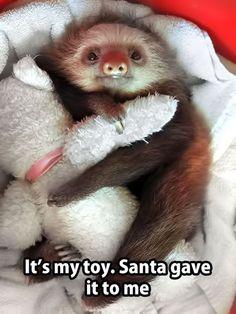 sloth peluche