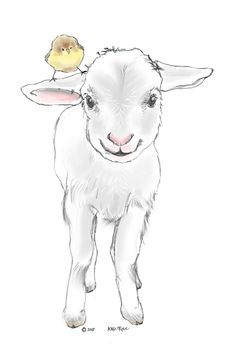 82 Best Lambs Sheep Images Sheep Drawing S Drawings