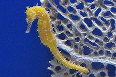 #seahorse Florida Aquarium