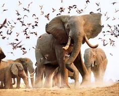 Elephants by Steve Bloom – in pictures