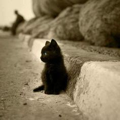 45 Cats and Kittens Pictures -