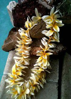 Yellow Plumeria Lei... Honolulu Oahu, Oahu Hawaii, Maui, Hawaiian Flowers, Tropical Flowers, Mahalo Hawaii, Hawaiian Homes, Kauai Wedding, Hawaiian Islands