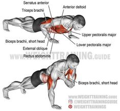 Shoulder tap push-up. A compound exercise. Target muscle: Lower Pectoralis Major. Synergists: Upper Pectoralis Major, Anterior Deltoid, Triceps Brachii, and Serratus Anterior. Dynamic stabilizer: Biceps Brachii (short head only). Important stabilizers: Internal and External Obliques, and Rectus Abdominis.
