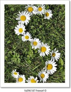 Free art print of Letters of daisies. Get up to 10 Gallery-Quality Art Prints for Free. Little Flowers, Beautiful Flowers, Gift Card Printing, Moonlight Photography, Sunflowers And Daisies, Bloom Where Youre Planted, Daisy Love, Flower Rangoli, Free Art Prints