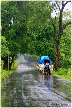 Lush green Kerala , India