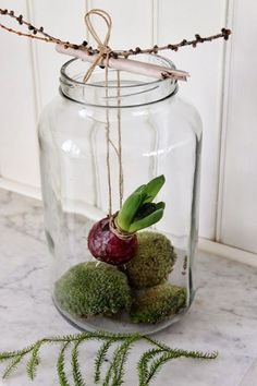 Houseplants for Better Sleep Bulb Plant In Mason Jar Flower Decorations, Christmas Decorations, Deco Nature, Deco Floral, Bulb Flowers, Christmas Inspiration, Ikebana, Pretty Flowers, Christmas Time