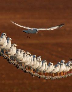 SeagullsTeam © NeGGGorich