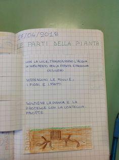 I segreti delle piante in classe seconda: esperienze e suggestioni tra scienze e arte (1)   La Finestra Sull'Albero