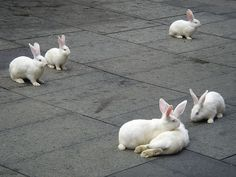 New Zealand white bunnies on a sidewalk. looked like these babies but also had gray spots.