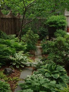Shade Garden: Really nice lush green planting. Love ferns and Hostas. Trouble is the slugs in my garden also love the Hostas