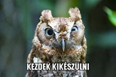 Funny Fails, Funny Memes, Jokes, Funny Animals, Cute Animals, Everything Funny, Cyberpunk, Funny Pictures, Harry Potter