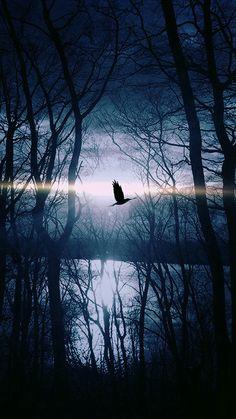Wood Night Dark Nature Bird Fly Lake #iPhone #6 #plus #wallpaper