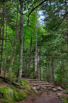 ✯ Beech Mountain Trail - Acadia