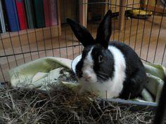 Jasper Rabbit | Pawshake Budel