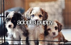 I love puppies!