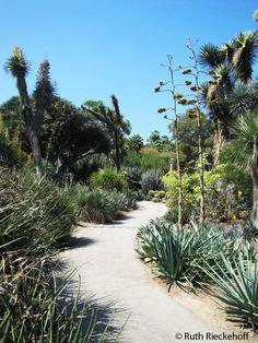Path meandering thru the garden,The Huntington, San Marino, California
