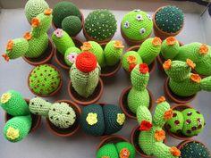 Piante Grasse - http://www.estroo.it/2013/03/01/piante-grasse/