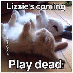 Lizzie The Walking Dead