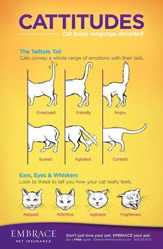 Learn to read your cat's body language! For more on cat body language, click the image!: