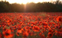 Visit the Fields of Poppy at Enisala! You need to time your trip very carefully as they stay in bloom only for a short time during May.